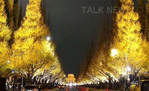 神宮外苑いちょう並木ライトアップ
