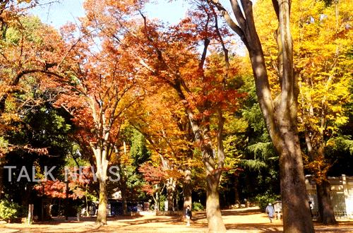 都内紅葉/井の頭公園