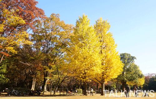 都内紅葉スポット/北の丸公園