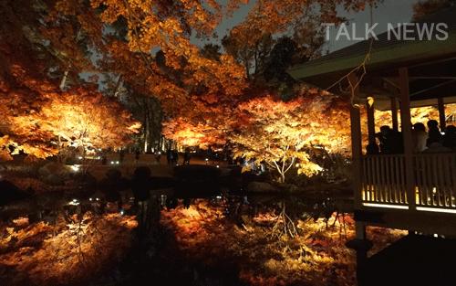 大田黒公園ライトアップ
