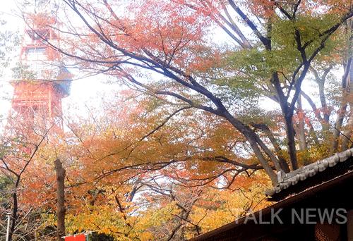 都内紅葉スポット/増上寺