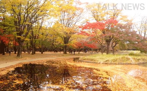 都内オススメ紅葉/代々木公園