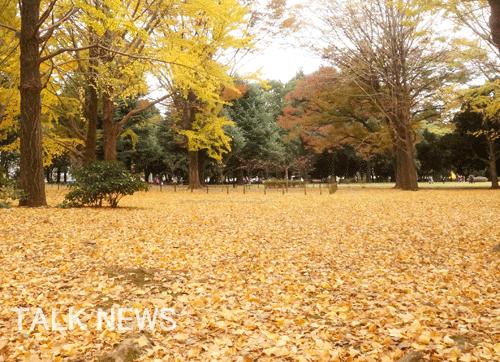 都内紅葉/代々木公園